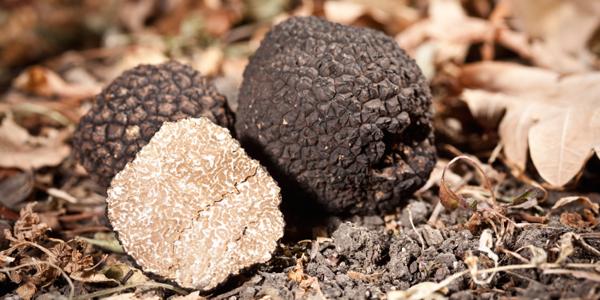 Truffels in bos